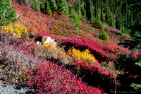 Fall Color at Mt. Rainier
