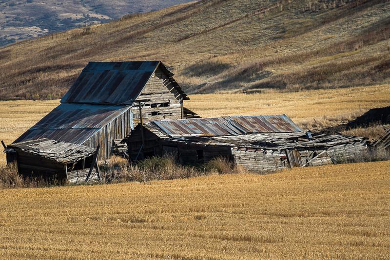 Tumbledown Barns and Sheds