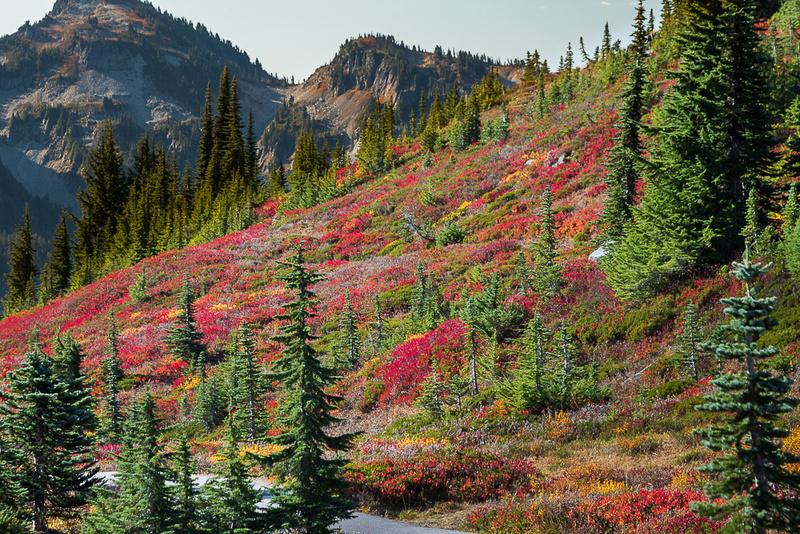 Fall Color on hillside #1