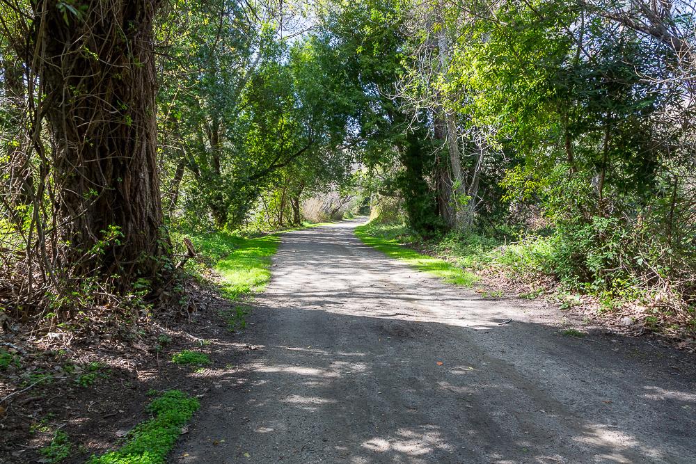 Andrew Molera State Park 2