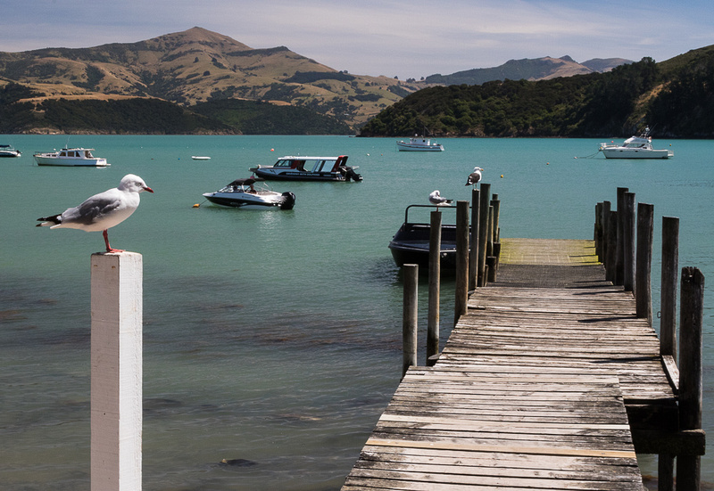 Seagull and dock