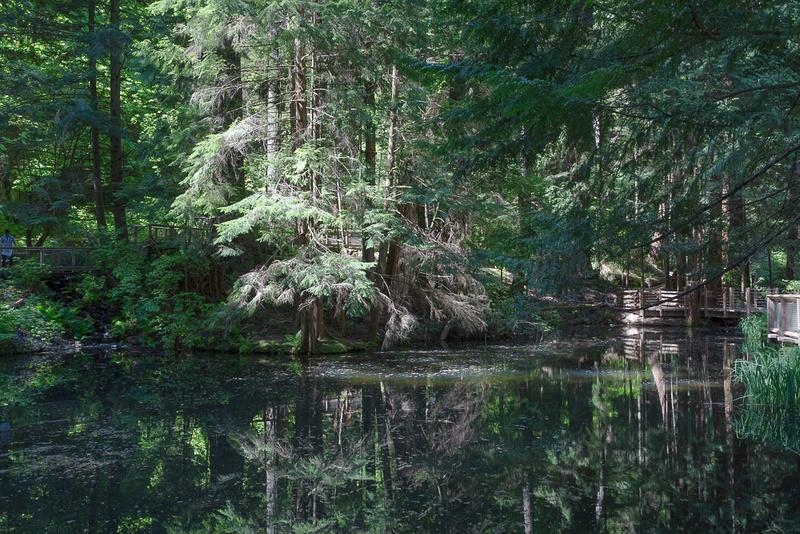 Lower Pond, Capilano park