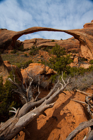 Down tree and Landscape Arch