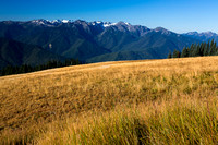 Grass & mountians at Hurricane ridge