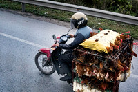 Chickens on Motor Bike, near Ha Long Bay, Vietnam