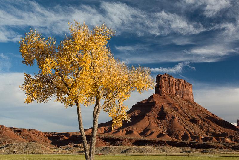 Butte & autumn tree
