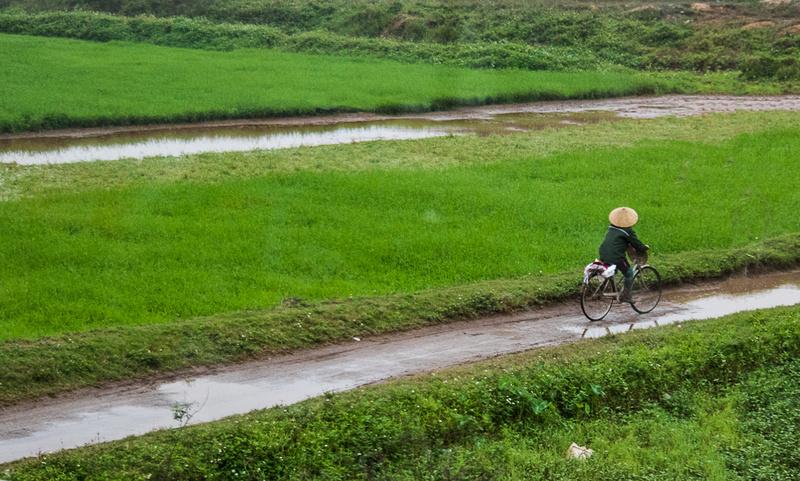Biking to the paddy's