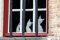 Three Porcelain cats in a Bruges window