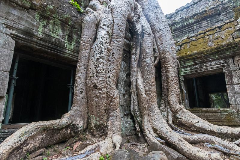 Ta Prohm temple #2, Cambodia