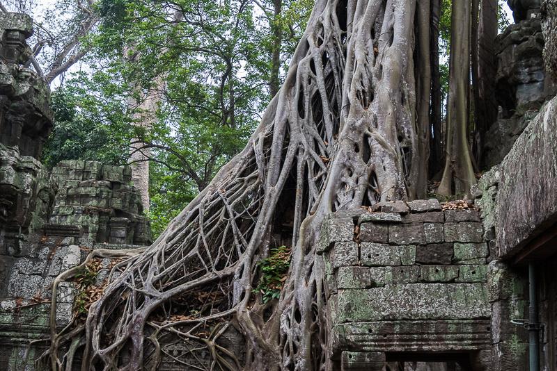 Ta Prohm temple #5, Cambodia