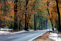 Fall & winter colors on Nothside Drive, Yosemite