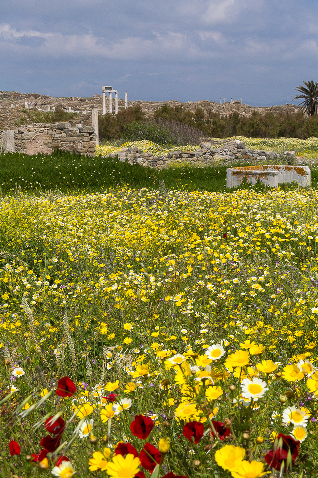 wild Flowers at Delos #3