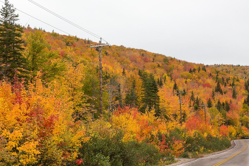 Fall Color Hillside, Cape Smokey (Cape Breton Island, NS Canada)