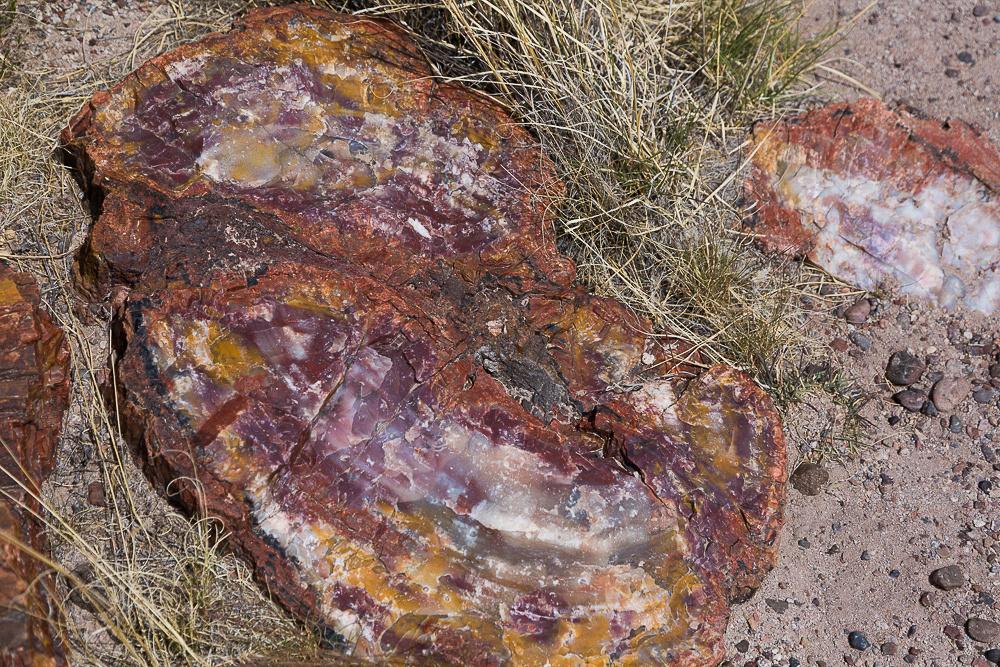 Petrified Forest 7, AZ
