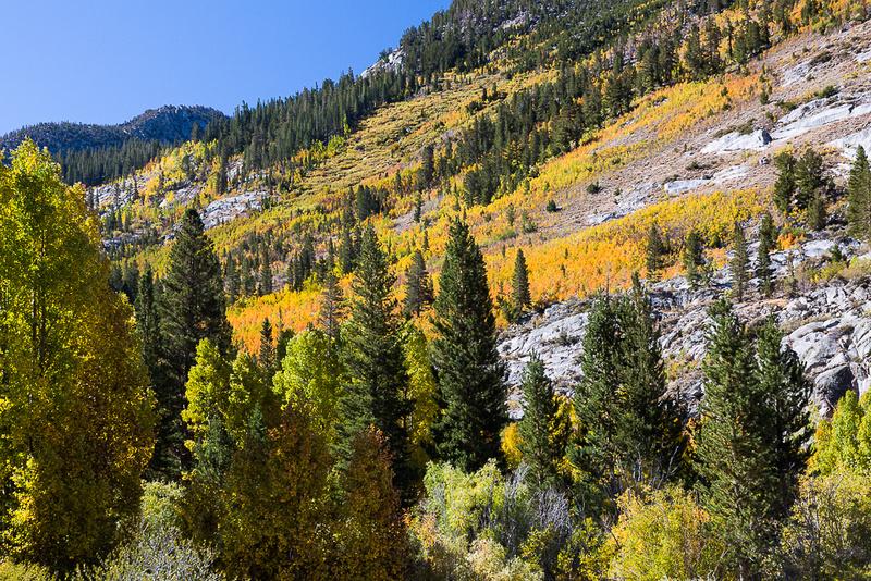 Esastern Sierra Fall color #01