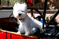 Model T with Dog