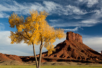 Butte & autumn tree