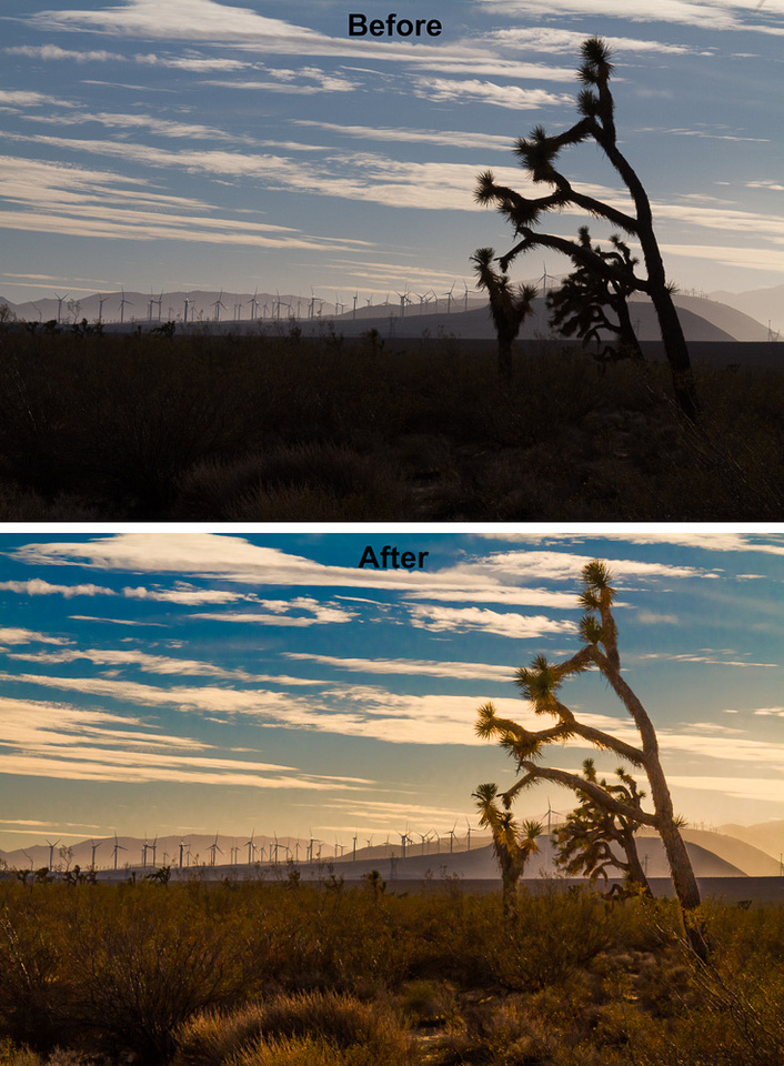 Joshua Trees and Wind Turbines 3
