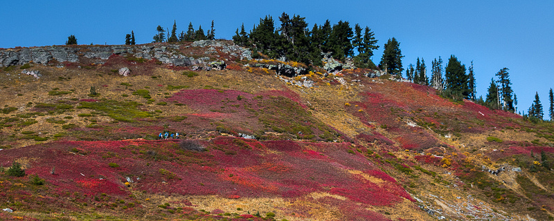 Fall Color along Upper Skyline Trail