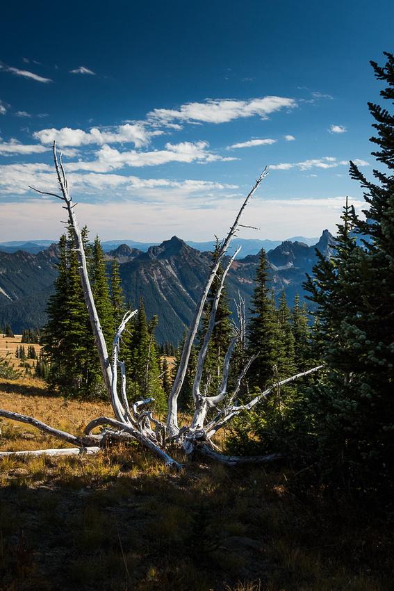 Cascade Range from Sunrise Nature Trail