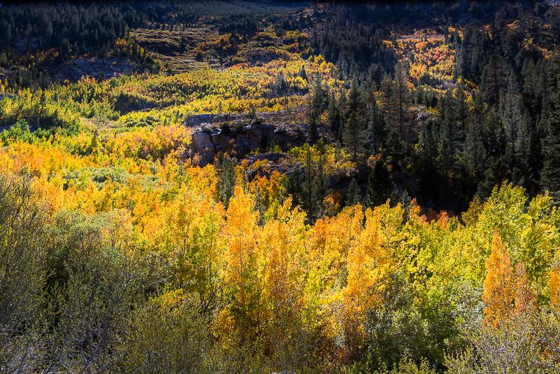 Esastern Sierra Fall color #05