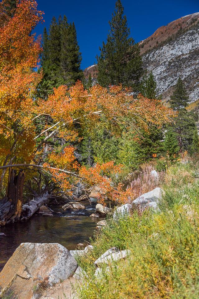 Esastern Sierra Fall color #03