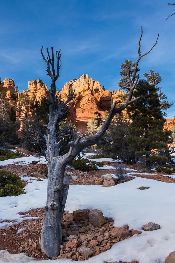 Red Canyon SP Utah #3