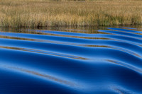 Ripples & Reeds