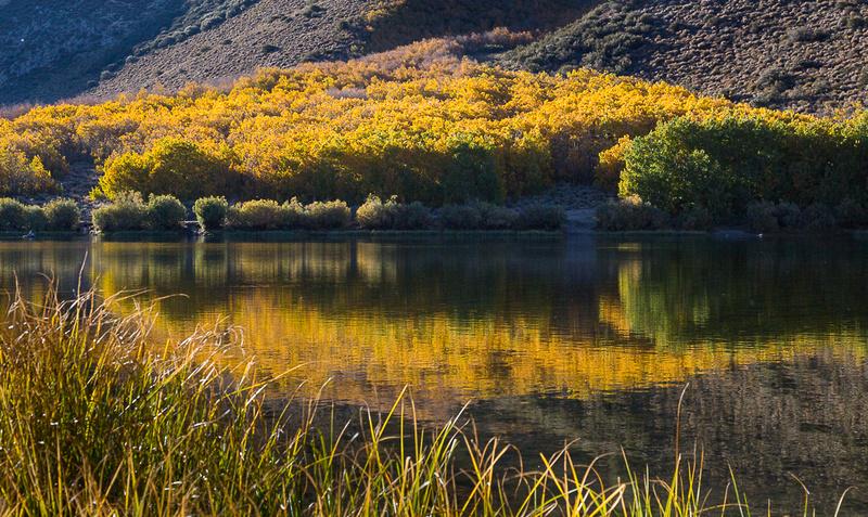 Esastern Sierra Fall color #06