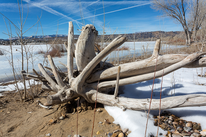 Bleaced stump